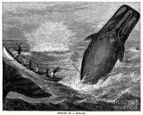 19th Century Art Print featuring the photograph Whaling, 19th Century by Granger