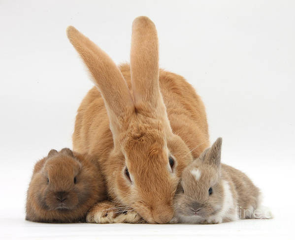 Nature Art Print featuring the photograph Rabbits by Mark Taylor