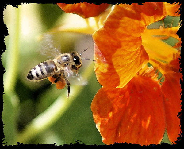 Bee Art Print featuring the photograph Beeee....utiful by Ellen Lerner ODonnell