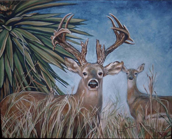 Deer Art Print featuring the painting Berry Buck And Doe by Diann Baggett