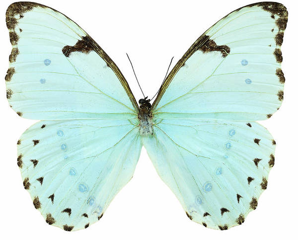 Horizontal Art Print featuring the photograph Close-up Of A White Butterfly by Stockbyte