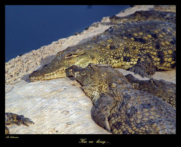 Crocodile Art Print featuring the photograph Crocodile by Arik Baltinester