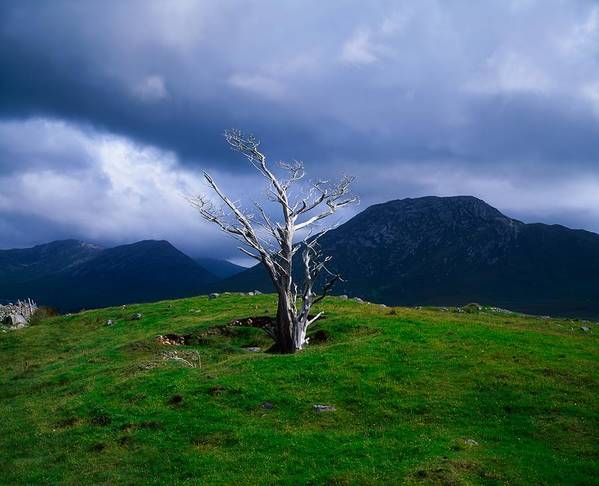 Atmospheric Print featuring the photograph Dead Tree, Connemara, Co Galway, Ireland by The Irish Image Collection