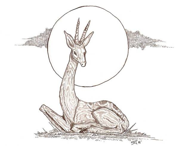 Gazelle Art Print featuring the drawing Gazelle by Stephen Taylor