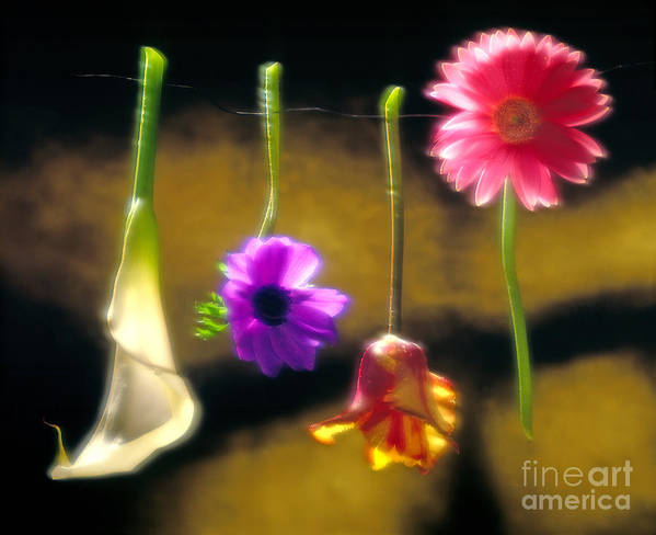Tulip Art Print featuring the photograph Hanging Flowers by Tony Cordoza