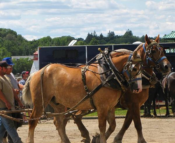 Horses Art Print featuring the photograph Horse Pull I by Melissa Parks