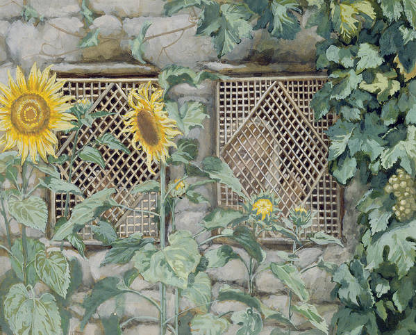 Jesus Looking Through A Lattice With Sunflowers Art Print featuring the painting Jesus Looking Through A Lattice With Sunflowers by Tissot