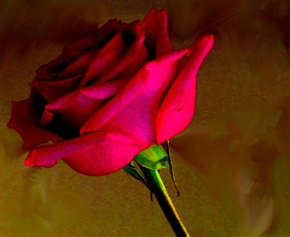Rose Art Print featuring the photograph Mystical Rose by Ian MacDonald
