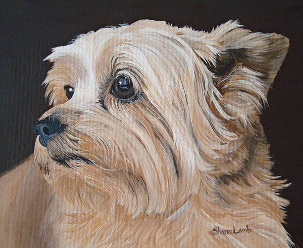 Pet Portrait Painting Dog Cairn Terrier Cats Horses Labs Sheperds Art Print featuring the painting Pet Portrait Painting Commission Cairn Terrier by Sharon Lamb