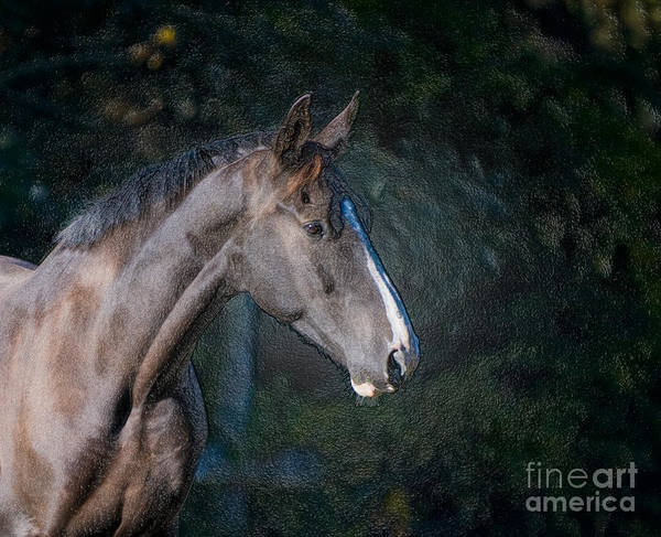 Head Shot Of A Horse Art Print featuring the photograph Portrait Of A Horse by Jim Calarese
