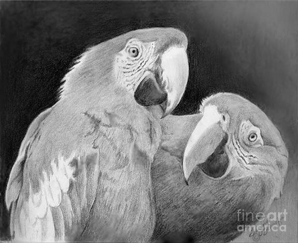 Macaws Art Print featuring the drawing Really Omg by Suzanne Schaefer