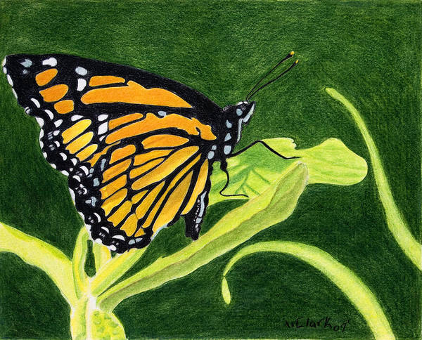 Animals Art Print featuring the painting Spring Monarch by Wade Clark