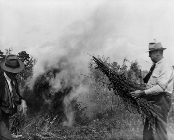History Art Print featuring the photograph Two Men Burning Marijuana In Field by Everett