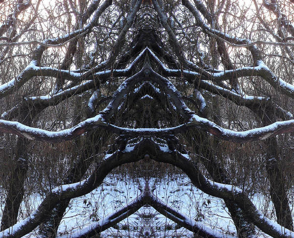 Trees Art Print featuring the photograph We Protect The Trees by Marilynne Bull