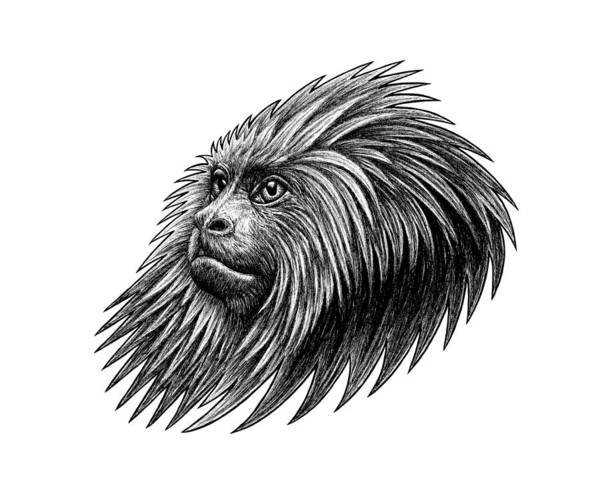 Money Art Print featuring the drawing Golden Headed Lion Tamarin - Ink Illustration by Loren Dowding