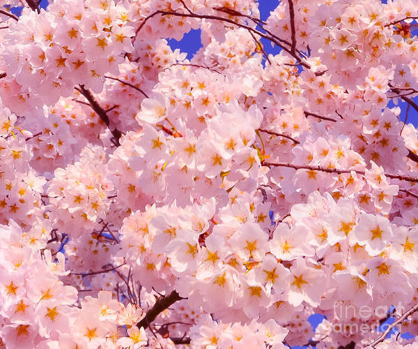 2012 Centennial Celebration Art Print featuring the photograph Bursting With Blossoms by Jeff at JSJ Photography