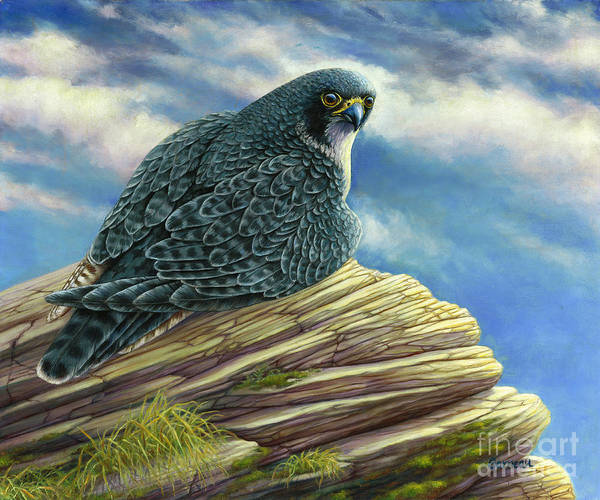 Peregrine Falcon Art Print featuring the painting Peregrine Falcon by Catherine Garneau