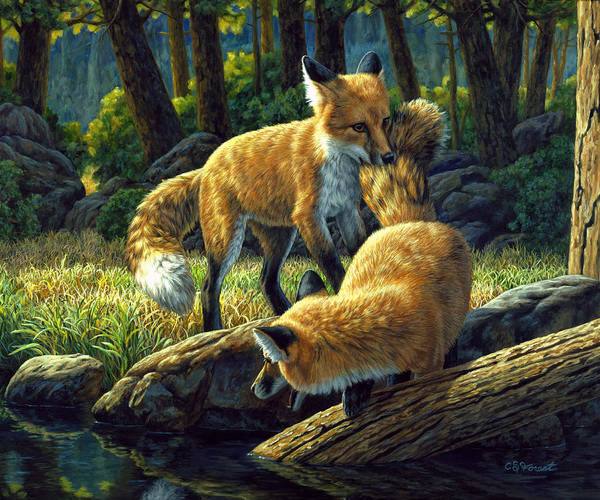 Fox Art Print featuring the painting Red Foxes - Sibling Rivalry by Crista Forest