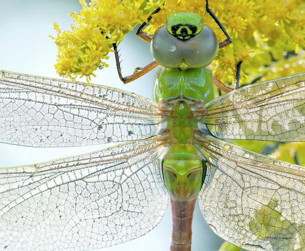 Dragonfly Art Print featuring the photograph Sunbathing by Vickie Szumigala