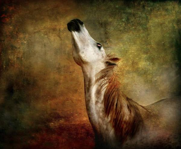Horse Art Print featuring the photograph Talking To The Moon by Dorota Kudyba