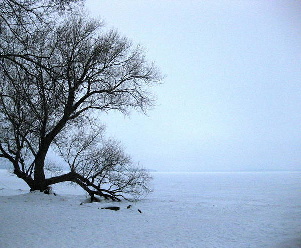 Winter Art Print featuring the photograph Extreme by Teresa Rogers