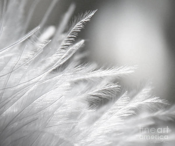 Feathery White Art Print featuring the photograph Feathery White by Danuta Bennett