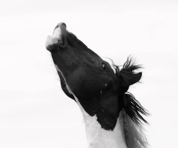 Stallion Art Print featuring the photograph Masculinity by Szalonaisa Photography