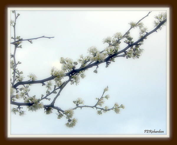Blossums Art Print featuring the photograph Profusion by Priscilla Richardson