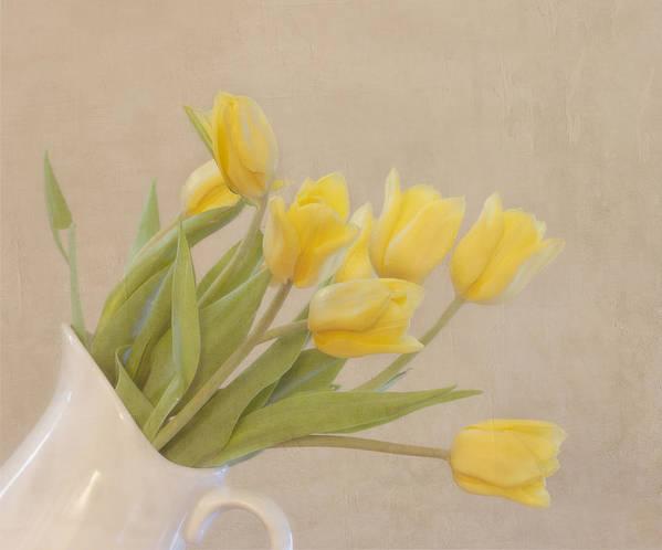 Horizontal Art Print featuring the photograph Yellow Tulips by Kim Hojnacki