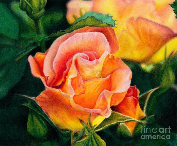 Coloured Pencil Art Print featuring the painting A Rose For Nan by Amanda Jensen