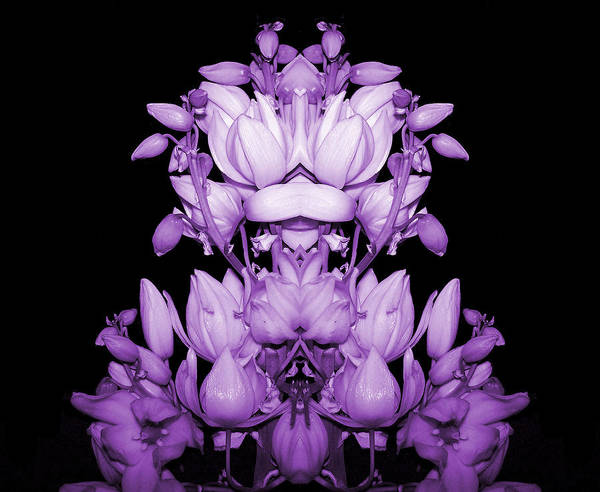 Yucca Art Print featuring the photograph Double Purple by Evelyn Patrick