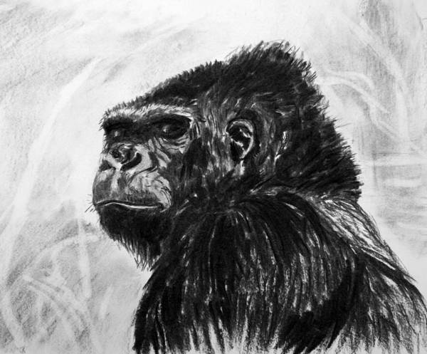 Gorilla. Animal Natural History. Charcoal. Art Print featuring the painting Gorilla by John Cox