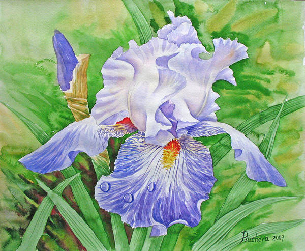 Flowers Art Print featuring the painting Iris.drops Of Dew .2007 by Natalia Piacheva