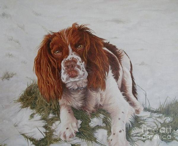 Dog Art Print featuring the painting Muttley-the Best Springer Spaniel by Pauline Sharp
