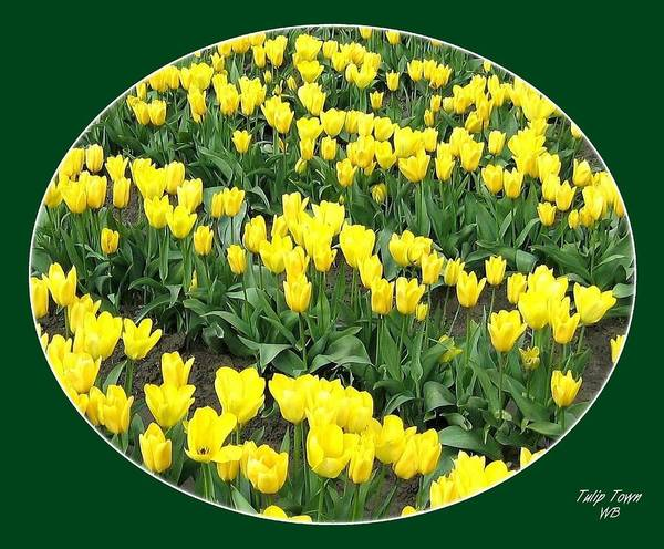Agriculture Art Print featuring the photograph Tulip Town 2 by Will Borden