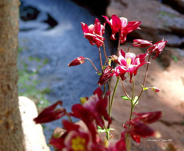 Flower Art Print featuring the photograph Waterfall And Columbine II - Pride Of Colorado by Christine S Zipps