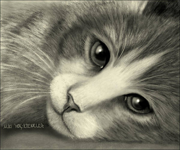 Cat Art Print featuring the drawing Cleo by Miki Krenelka