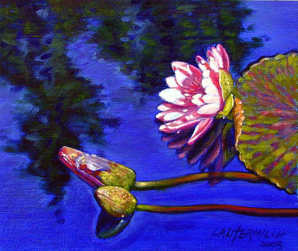 Water Lily Art Print featuring the painting Sunlight On Pink by John Lautermilch