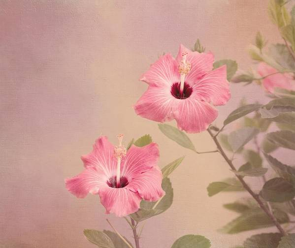 Pink Flower Art Print featuring the photograph Tropical Hibiscus by Kim Hojnacki