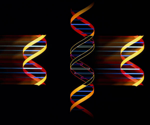 Dna Art Print featuring the photograph Computer Artwork Of Genetic Engineering by Laguna Design