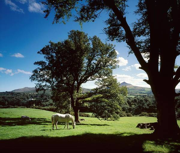 Enniskerry Art Print featuring the photograph White Horse At Powerscourt, Co Wicklow by The Irish Image Collection