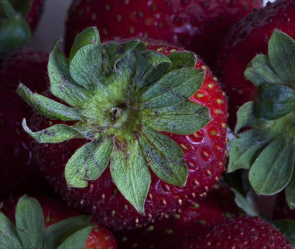 Strawberry Art Print featuring the photograph Strawberry 2 by Robert Ullmann