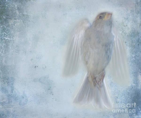 Bird Art Print featuring the photograph Birdness by Jim Wright
