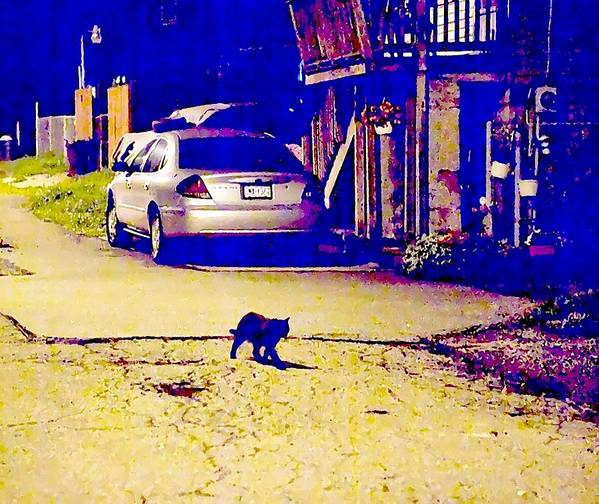 Black Cat Art Print featuring the photograph Black Cat Crosses Path by John Toxey