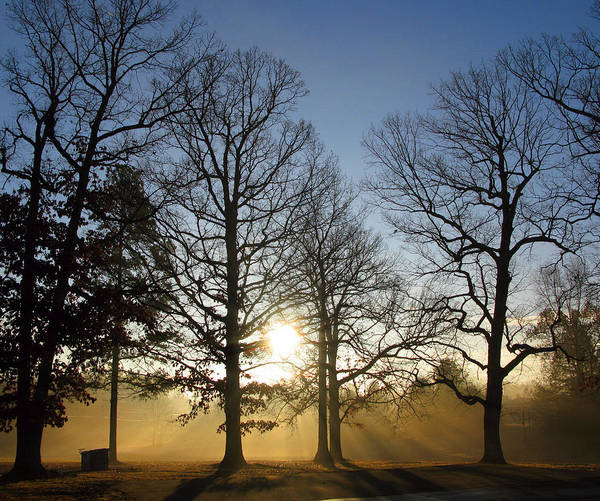 Trees Art Print featuring the photograph Early Morning Sunrise Through Trees And Fog by Richard Singleton
