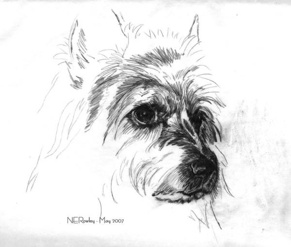 Dogs Art Print featuring the drawing Fancy - Head Study by Norma Rowley