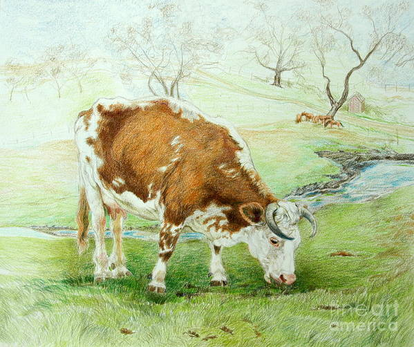 Cow Art Print featuring the drawing Foreman's Favorite by Jill Iversen