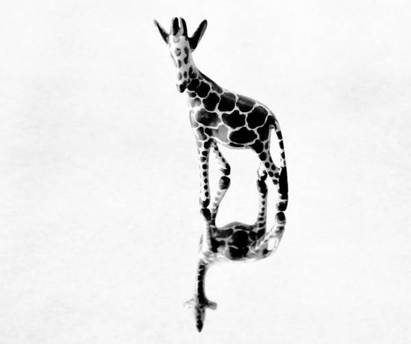 Giraffe Art Print featuring the photograph Giraffe by Roberto Bravo