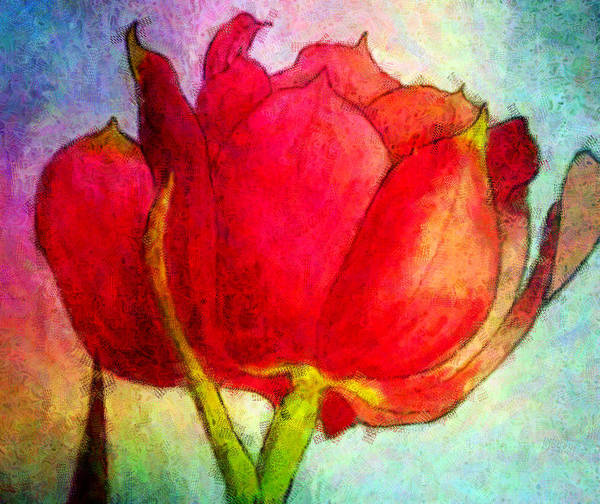 Tulip Flower Floral Red Spring Susan Epps Oliver Original Mixed Media Art Print featuring the painting Spring Red by Susan Epps Oliver