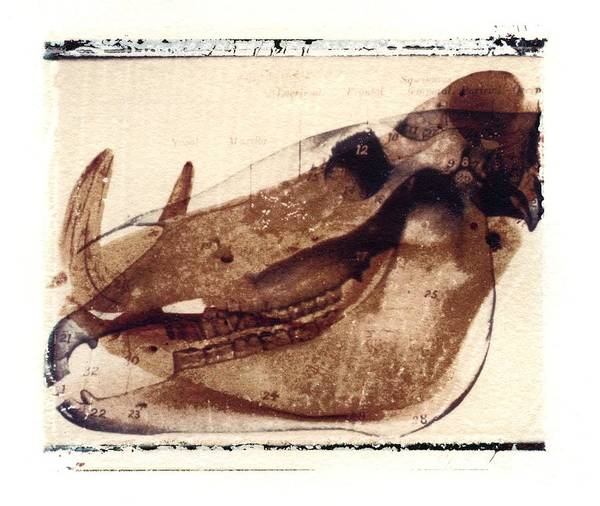 Polaroid Transfer Art Print featuring the photograph X Ray Terrestrial No. 6 by Jane Linders